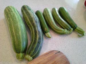 Zucchinis Galore