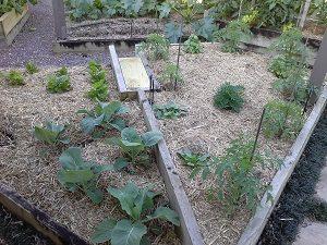 mulchgardenhunterbackyardveggiegrowers