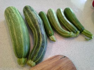 Zucchinis Galore – Freeze them